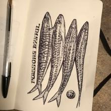 Sketch-threemackerelsofwhichone-antoinerenault-art-saatchiart-1.jpg